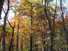 ナラ林の紅葉