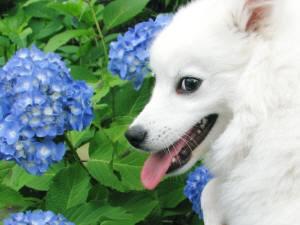 ん?紫陽花ってなに~?