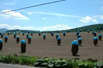 畑の宇宙人?