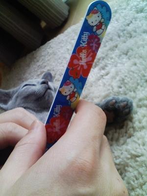 爪を切りました