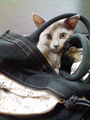 鞄の上が好き