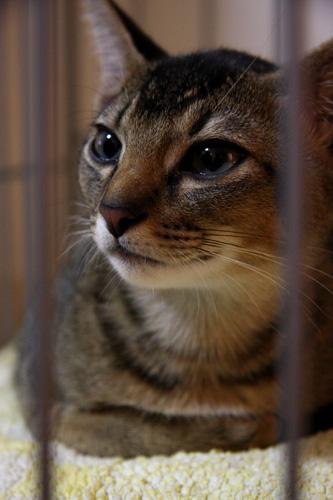ネオが生まれて3ヶ月