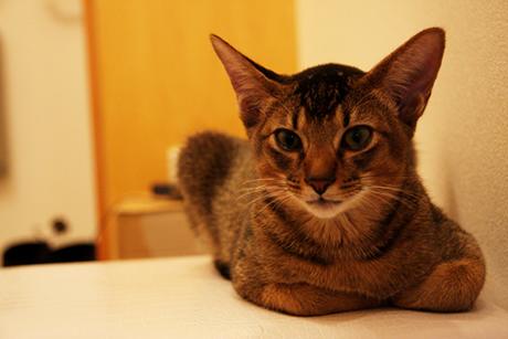 ネオが生まれて4ヶ月