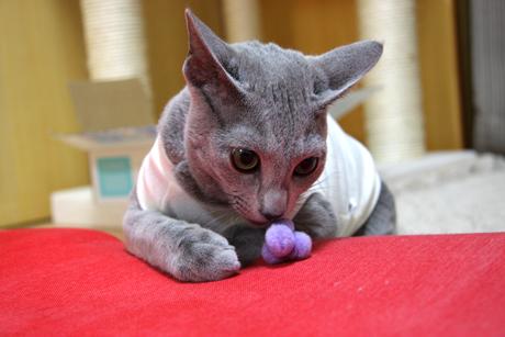 初めての猫服