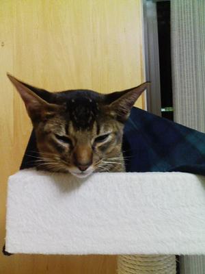 ネオの熱が心配です