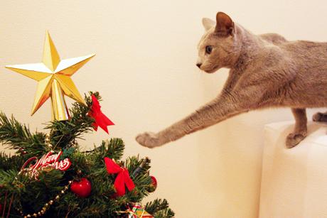 クリスマスツリーを出してみた