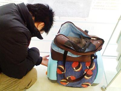 通院4回目・ギンの体調記録(2008/1/12)