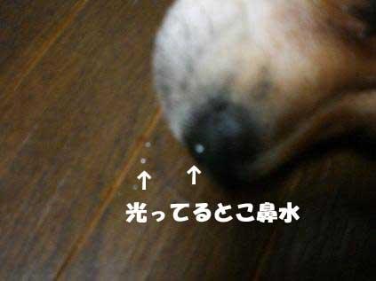 20070610214446.jpg