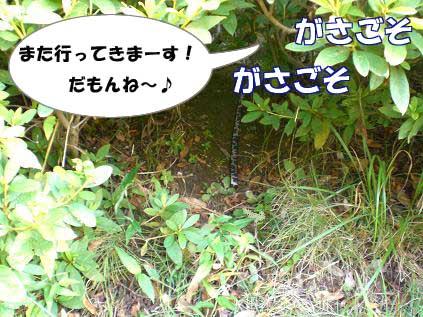 20070809000147.jpg