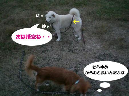20071111081227.jpg