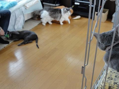 ケージを巡るできごと08(2011.03.30)