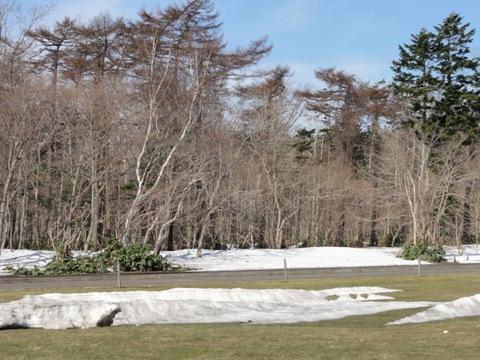 職場地方、雪解けた(2011.04.19)