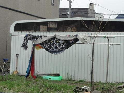 これも鯉のぼり(2011.05.04)