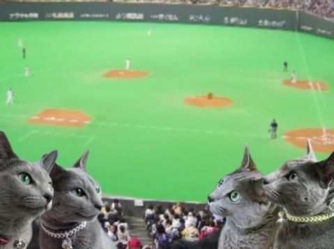 札幌ドームでなかよく観戦♪