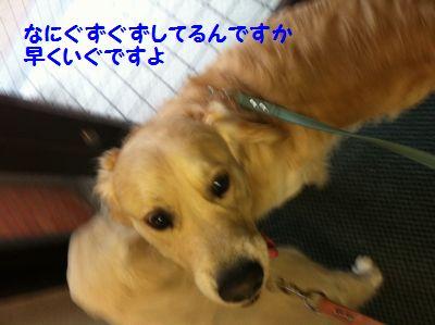 20110409_04.jpg