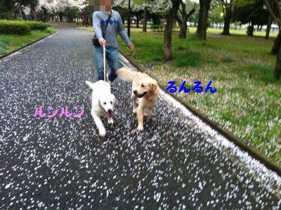 20110409_05.jpg