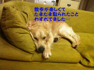 20110409_08.jpg