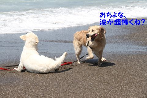 20110424_05_R.jpg
