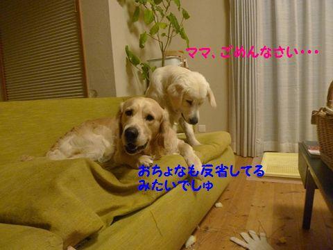 20110427-4_R.jpg