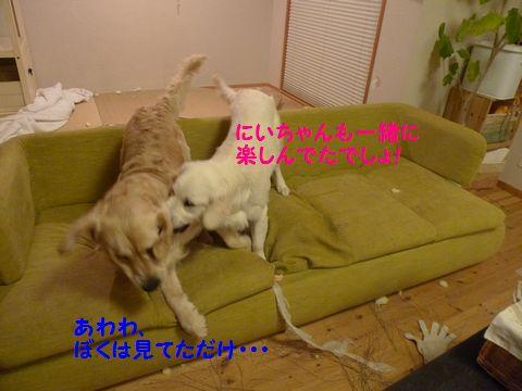 20110427-5_R.jpg