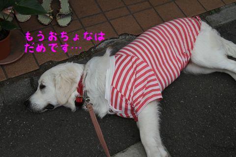 20110502_15_R.jpg