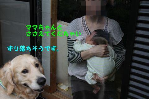 20110505_05.jpg