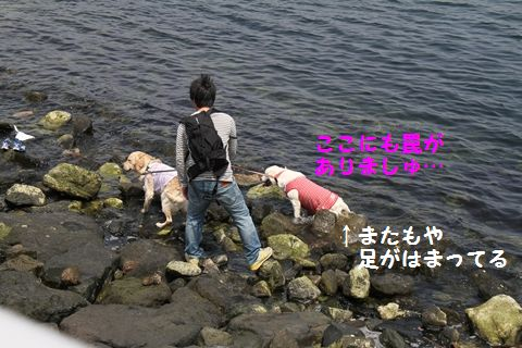 20110507_12_R.jpg