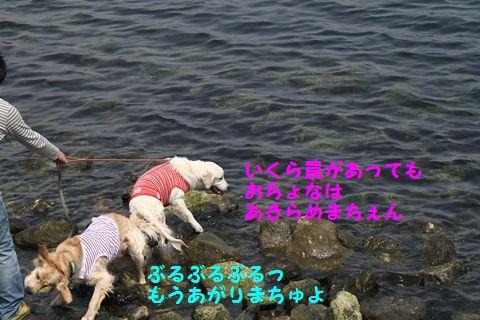 20110507_13_R.jpg