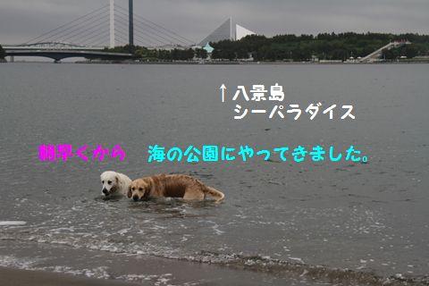 20110508_01_R.jpg