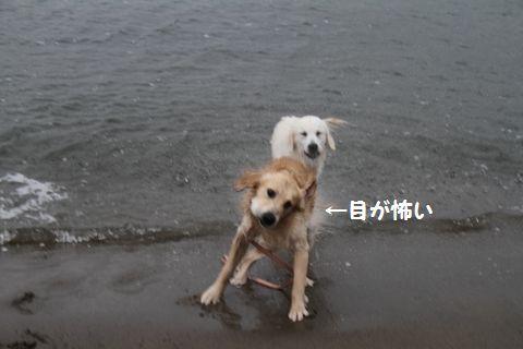 20110508_05_R.jpg
