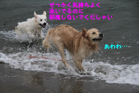 20110508_13_R.jpg