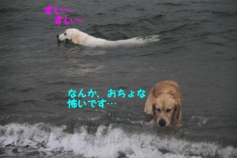 20110508_14_R.jpg
