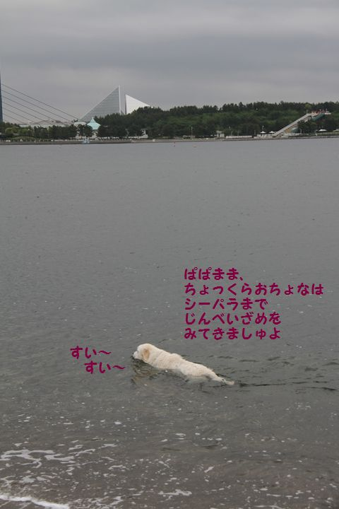 20110508_15_R.jpg