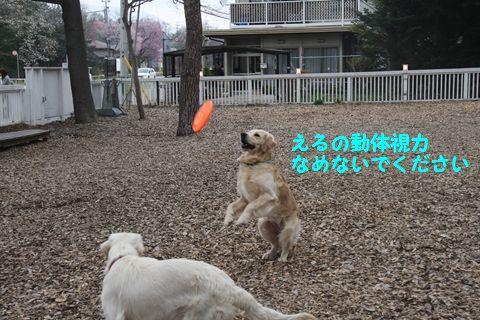 20110509_11_R.jpg