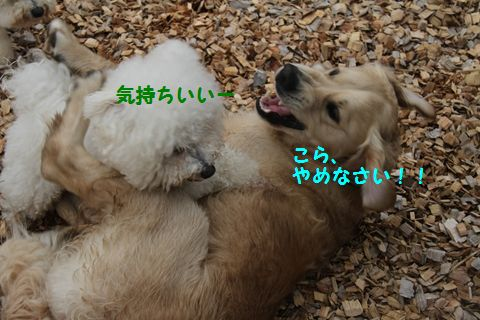 20110511_11_R.jpg