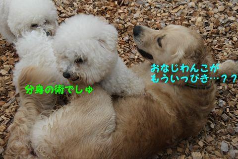 20110511_12_R.jpg