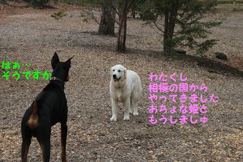20110511_17_R.jpg