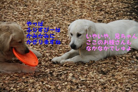 20110511_20_R.jpg