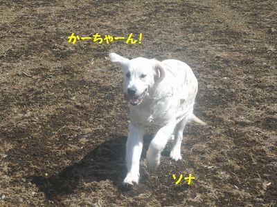 P1020063.jpg