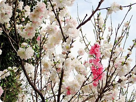 桃の間から空が