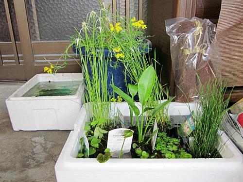 水生植物たち 五十三
