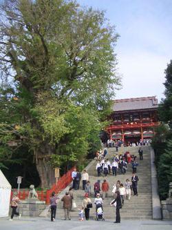 Wiki八幡宮