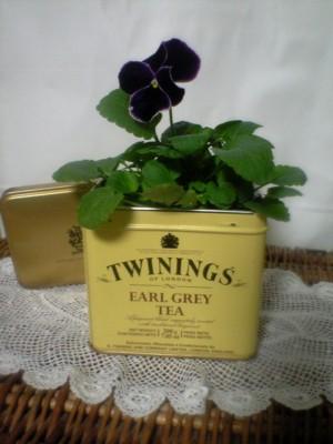 パンジーin紅茶缶