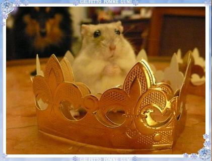 グミ君王子