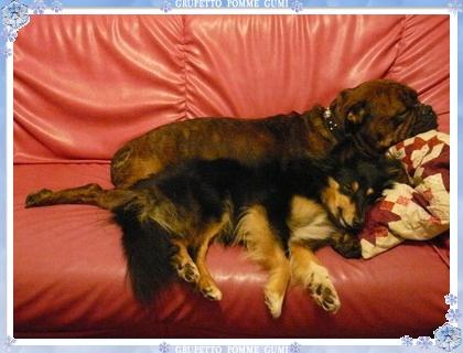 ポムの腕枕・・・