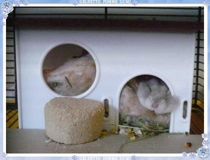 ウサギみたい?