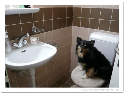 お客様様トイレ~