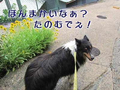 110604_05_20110607203959.jpg