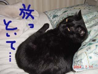 枕とちゅな3
