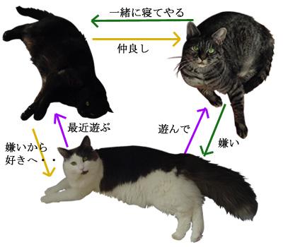 猫物相関図